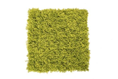 modulo lichene